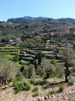 Manicured terraces on the way to Port de Soller