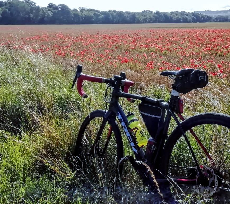 A Trek to see poppys